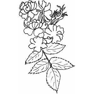 Strange Flowers Coloring Sheet