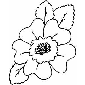 Beautiful Flower Coloring Sheet