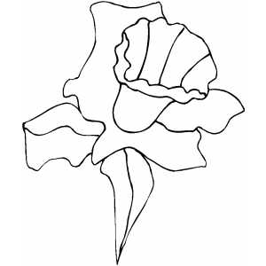 Daffodil Coloring Sheet