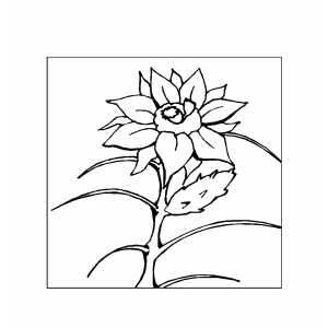 Flower In Frame Coloring Sheet