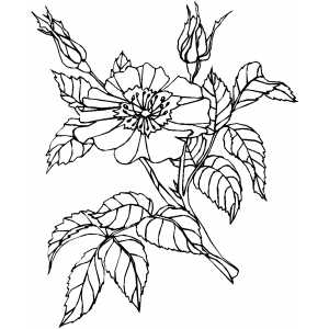 Flower On The Tree Coloring Sheet