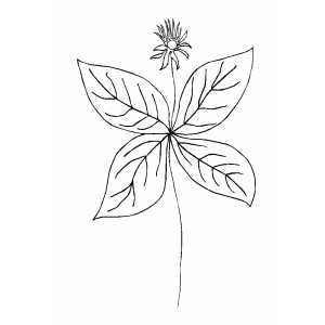 Flower With Big Leaves Coloring Sheet