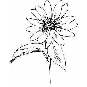 Flower With Fifteen Petals Coloring Sheet