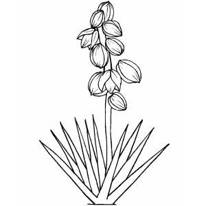Flowers22 Coloring Sheet