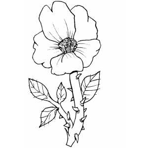 Flowers31 Coloring Sheet