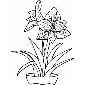 Flowers In Pot Coloring Sheet