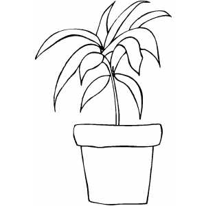 Plant With Long Leaves Coloring Sheet