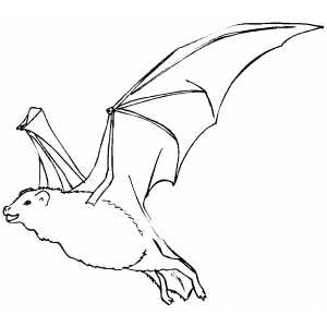 Flying Bat Coloring Sheet