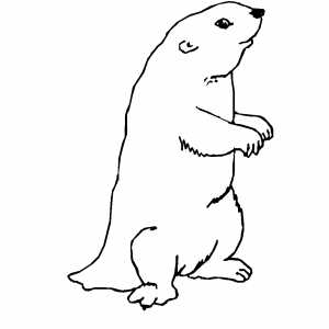 Gopher Coloring Sheet