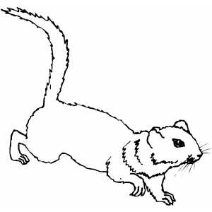 Ground Squirrel Coloring Sheet