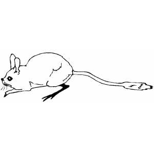 Jerboa Coloring Sheet