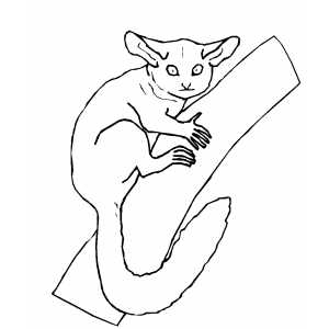 Lemur On Branch Coloring Sheet
