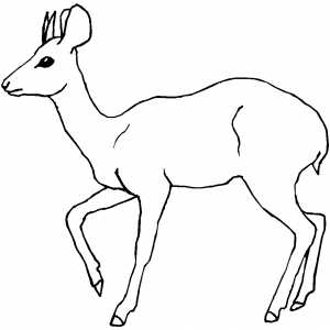Marching Antelope Coloring Sheet