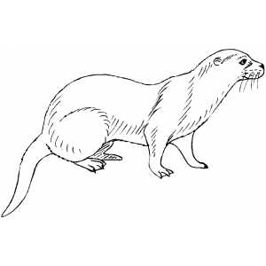 Mink Coloring Sheet