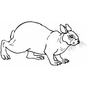 Old Rabbit Coloring Sheet