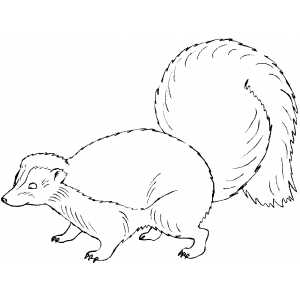 Skunk Coloring Sheet